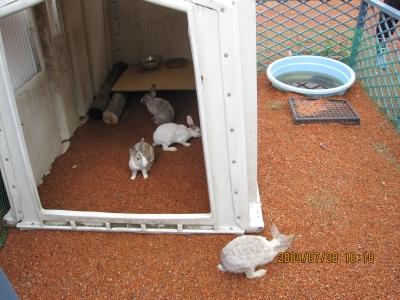 ウサギ・ネーブル店