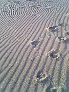 砂浜って歩くと気持ちいいね♪