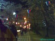 桜トンネル♪