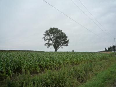 美瑛にて 哲学の木?