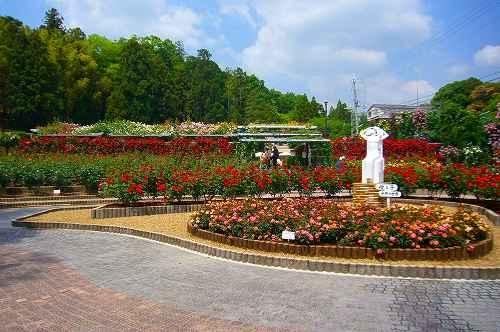 霊山寺バラ園