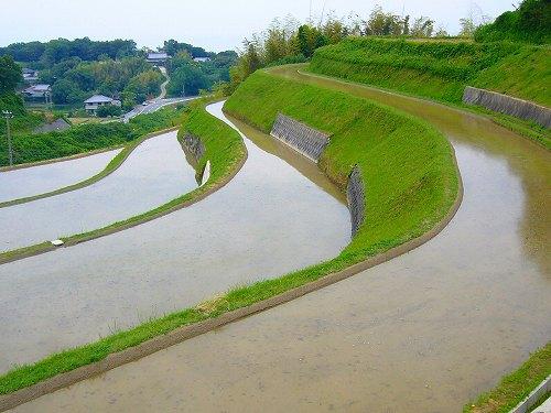 淡路島の田んぼ2