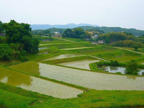 淡路島の田んぼ3