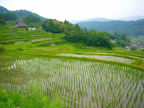 長谷の田んぼ