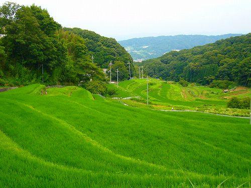 生駒の棚田