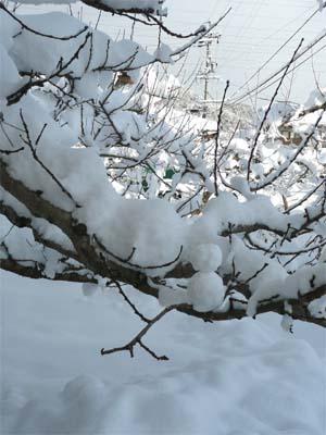 雪だるまはどこに・・・