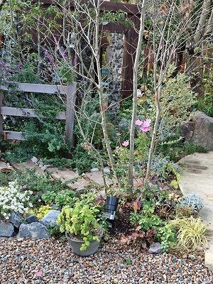 大空のくも お庭2.jpg