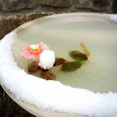 soranokumo 大空のくも 水鉢.jpg