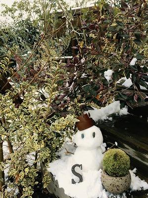 soranokumo 大空のくも 雪だるま 苔玉 木玉.jpg