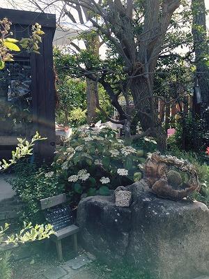 #soranokumo#手づくりいち#庭屋ナラティブ#ハクサンボク.jpg
