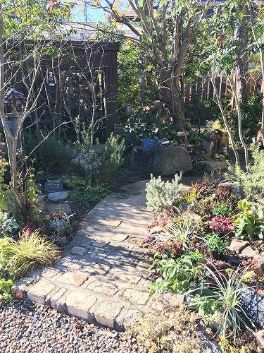 #大空のくも #soranokumo #冬の庭#植替え #before.jpg