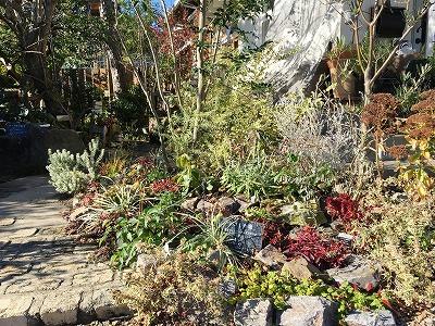 #大空のくも #soranokumo #冬の庭#植替え #before1.jpg