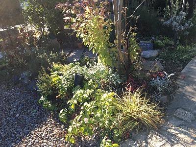 #大空のくも #soranokumo #冬の庭#植替え #before3.jpg