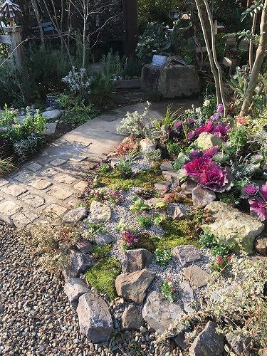 #大空のくも #soranokumo #冬の庭#植替え #after.jpg