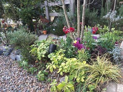 #大空のくも #soranokumo #冬の庭#植替え #after3.jpg