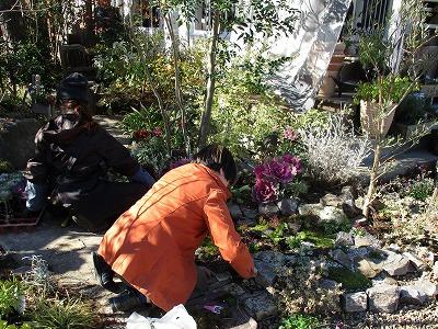 #大空のくも #soranokumo #冬の庭#植替え.jpg