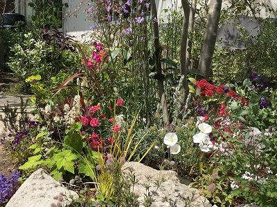 #soranokumo #大空のくも #春のお庭2.jpg