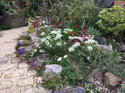 #soranokumo #大空のくも #春の庭.jpg