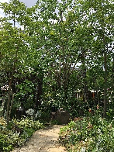 #大空のくも #soranokumoのお庭.jpg