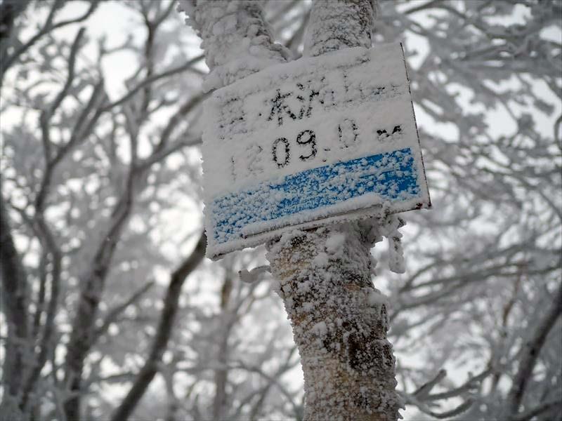 P1030150.JPG