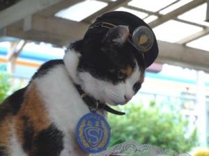 貴志駅の駅長たま