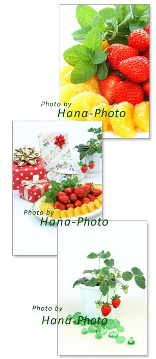苺 イチゴ 甘夏ミカン 甘夏 ミント フルーツ プレゼント 鉢植え