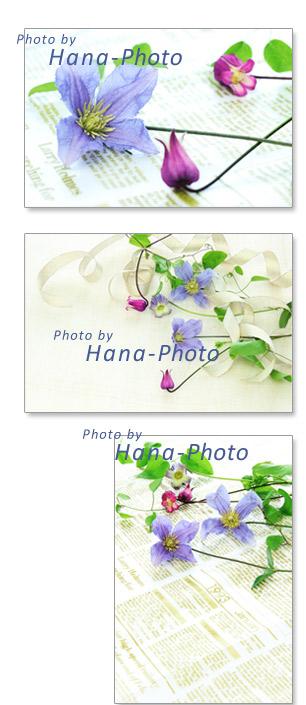 クレマチス 初夏 紫 ピンク 青 水色 花 きれい 清楚 ポストカード
