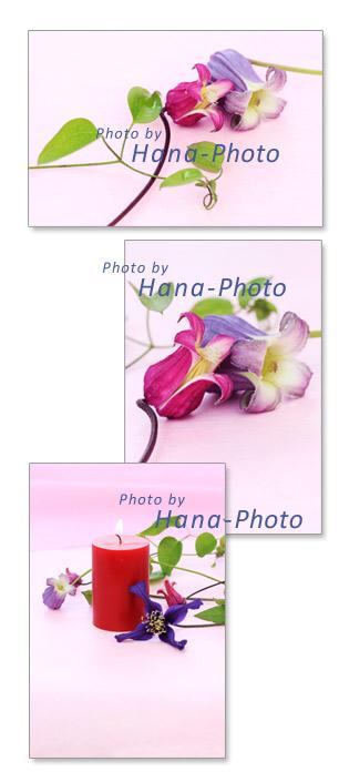 クレマチス ポストカード キャンドル 花 初夏 ピンク 薄紫