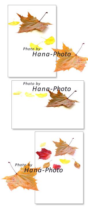 プラタナス 落ち葉 スズカケノキ すずかけ 秋 枯れ葉