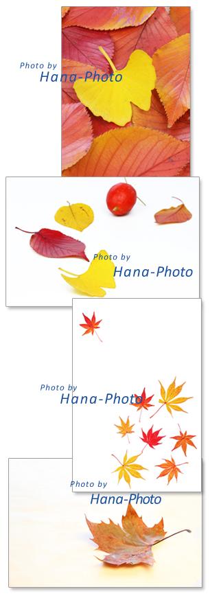 イチョウ 葉 紅葉 黄葉 赤 黄色 秋 プラナタス サクラ さくら 桜 いちょう 烏瓜 カラスウリ