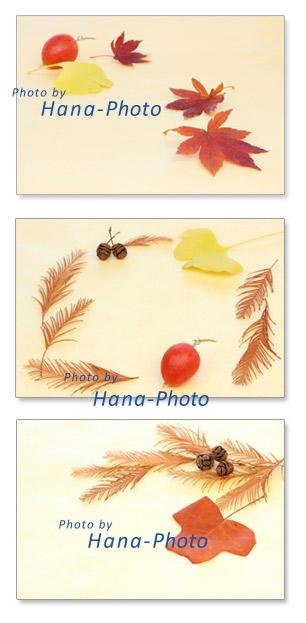 落ち葉 楓 イチョウ 烏瓜 カラスウリ いちょう 銀杏 カエデ ユリノキ メタセコイア 実 秋 枯れ葉