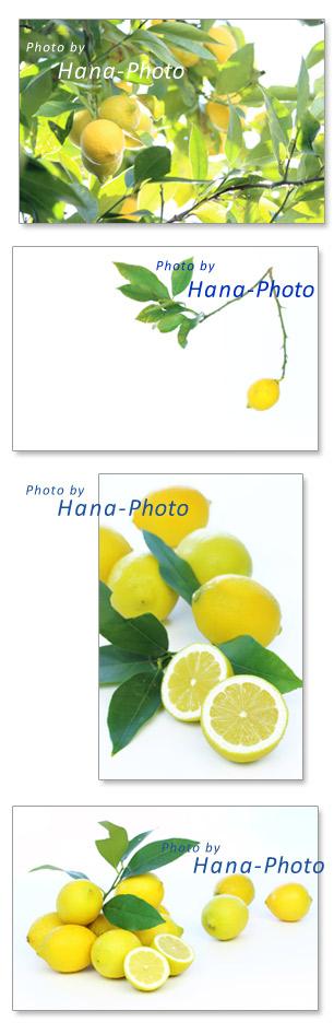 レモン 木 葉 たくさん 枝 れもん 檸檬 食べ物 果物 フルーツ カットフルーツ 断面