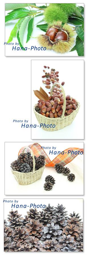 栗 クリ イガ イガグリ 毬栗 枝 どんぐり 松ぼっくり 籠 バスケット どんぐり 秋 木の実 食べ物