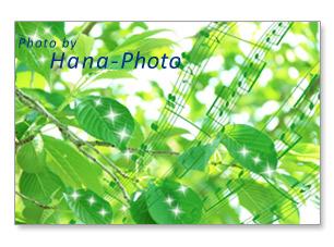 若葉 新緑 緑 楽譜 合成 葉 桜 さくら サクラ グリーン 緑