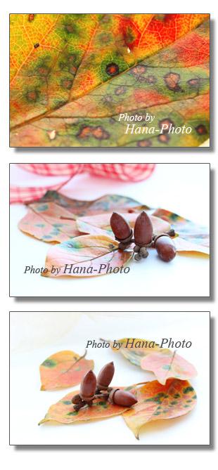 柿 柿の葉 カラフル きれい リボン どんぐり キュート 可愛い 秋色 紅葉