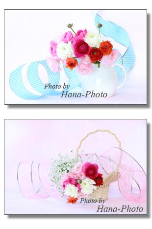 ラナンキュラス 春 春の花 花 きれい キュート 可愛い カラフル ピンク 赤 白