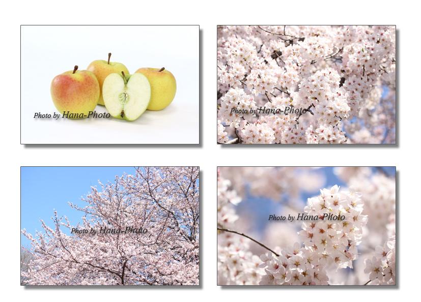リンゴ りんご アップル 桜 さくら サクラ 染井吉野 ソメイヨシノ 春 花 ピンク 青空