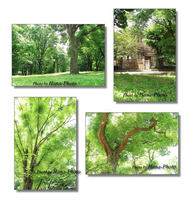 上野公園 緑 グリーン 新緑 大木 木 樹木 奏楽堂
