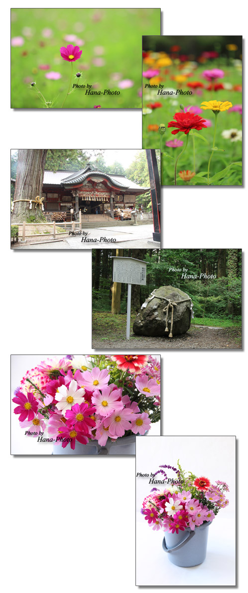 百日草 ジニア コスモス 花の都公園 北口本宮富士浅間神社 花