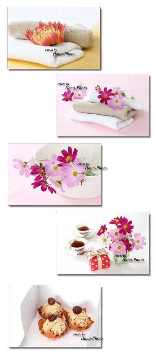 コスモス こすもす 秋桜 タオル エステ 洗い桶 温泉 ケーキ モンブラン プレゼント 紅茶 ダリヤ 秋 秋のイメージ