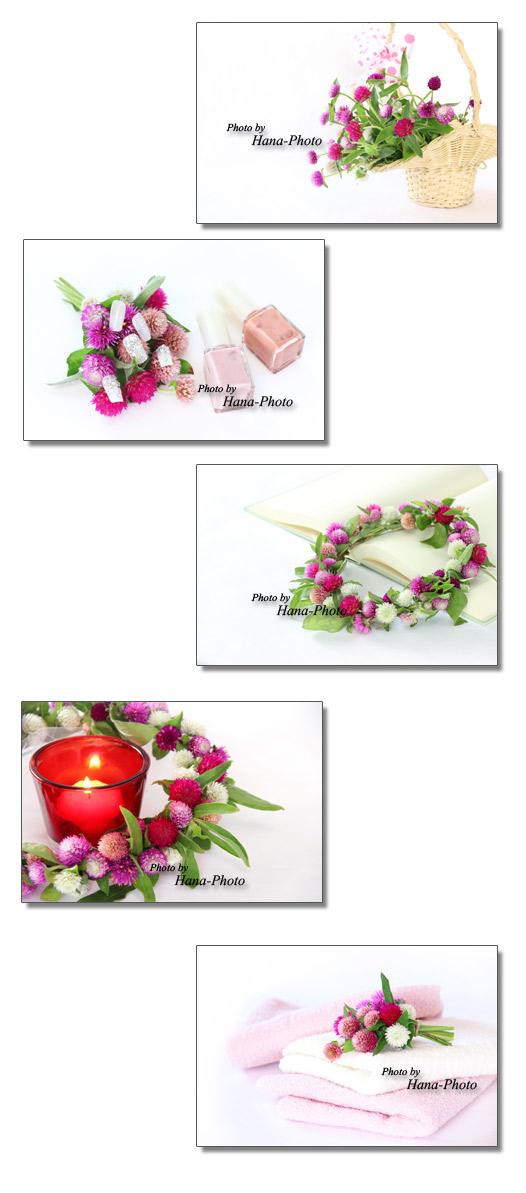 千日紅 センニチコウ せんにちこう 花 バスケット ブーケ 花束 ネイルチップ タオル 本 リース キャンドル カラフル ピンク
