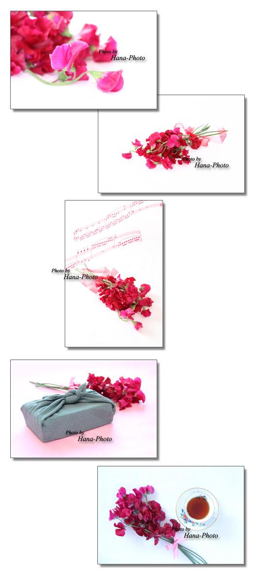 赤いスイトピー スイトピー スイートピー 春 赤 花 春の花 赤いスイトピー