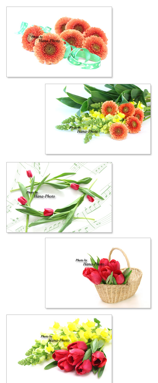 八重ガーベラ フルダブル オレンジ色 ガーベラ 八重 チューリップ 金魚草 黄色 赤 花束 ブーケ 春 春の花 花
