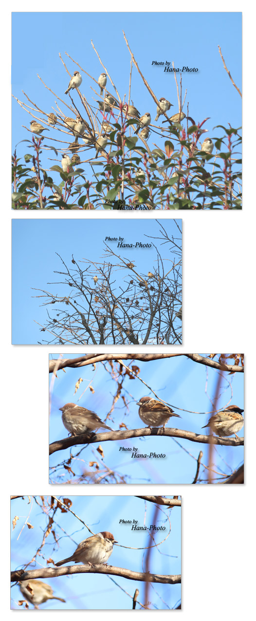 すずめ 雀 スズメ 雀の木 鳥 小鳥
