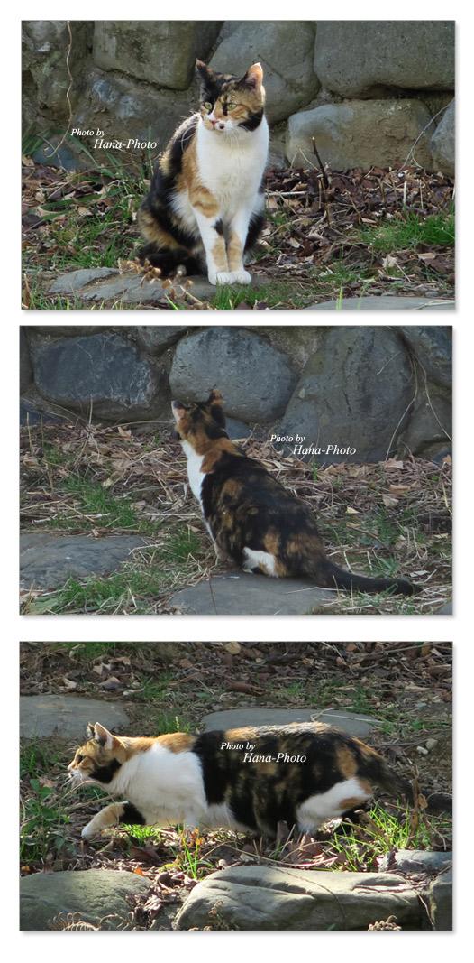 猫 ねこ ネコ ストーリー