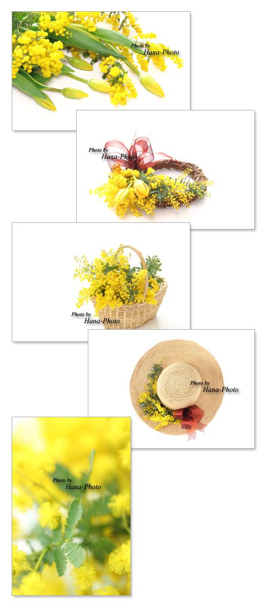 ミモザ 花 ミモザアカシア リース チューリップ 帽子 バスケット 花かご 黄色 春