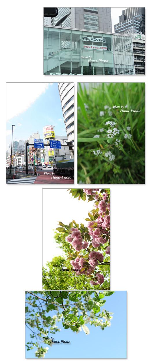 新宿 新宿バスタ 八重桜 カエデ 若葉 新緑 ピンク グリーン 青空 緑 ハナミズキ キュウリソウ
