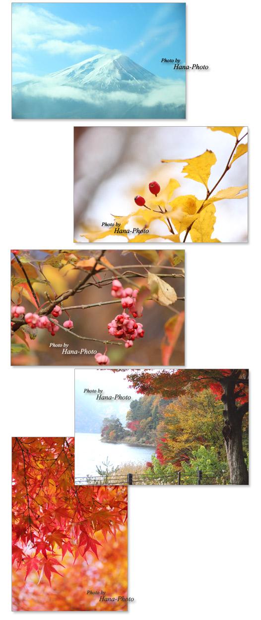 富士山 モミジ 紅葉 実 赤い実 秋 紅葉狩り