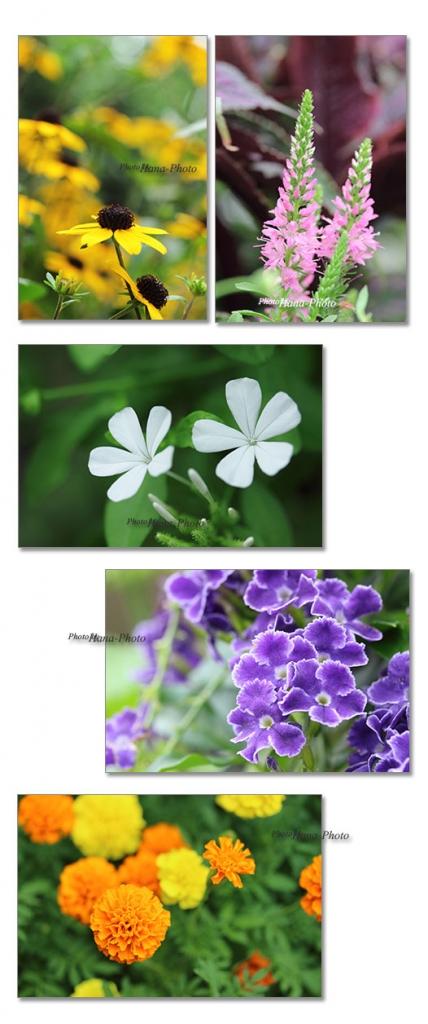 ルドベキア ルリマツリ デュランタ 花 夏 花壇の花