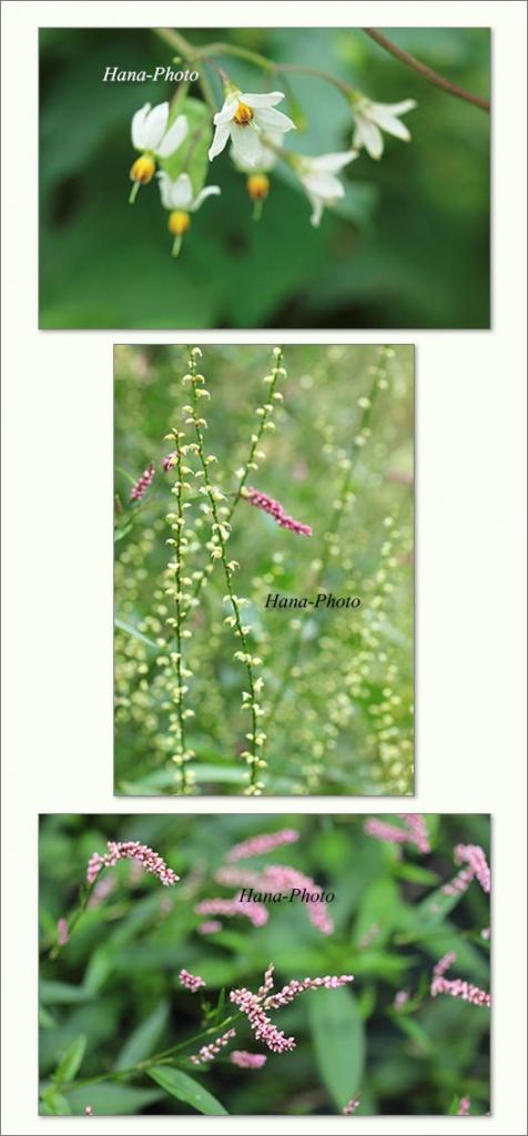 花 ヒヨドリジョウゴ 水引 ミズヒキ 白 イヌタデ ピンク 雑草 草